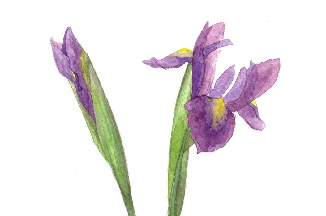 purples_